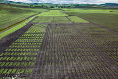 Palouse-DJI_0054-Edit
