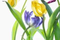 Flowers-_A7R0219-Edit
