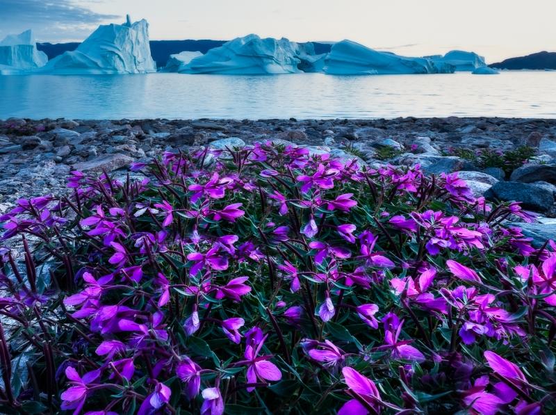 Greenland-_DSF0422-Edit