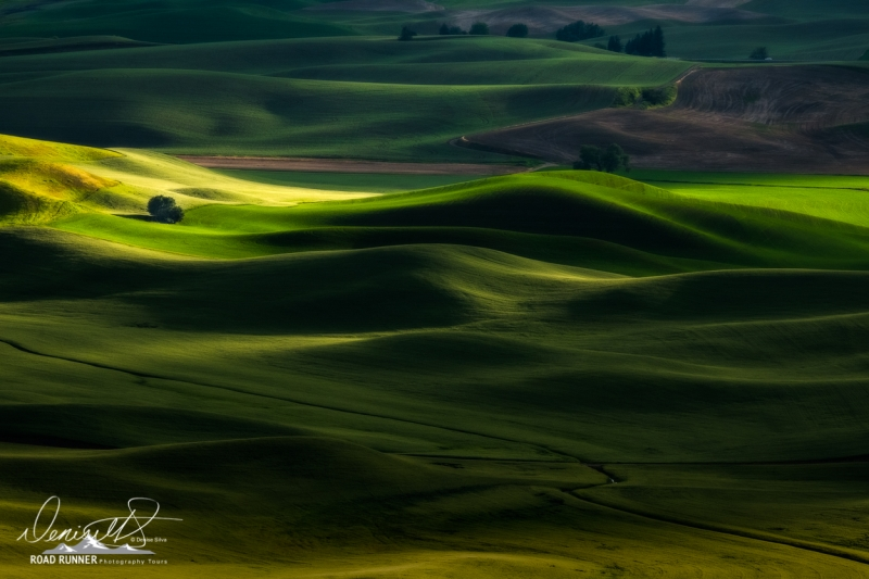 Palouse-_XT25898-Edit