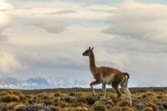 Patagonia-_DSF9327-2