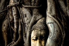 Buddha-Tree-small