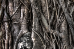BuddhaFce