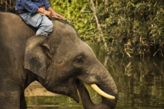 Chiang Mai Elephant 01