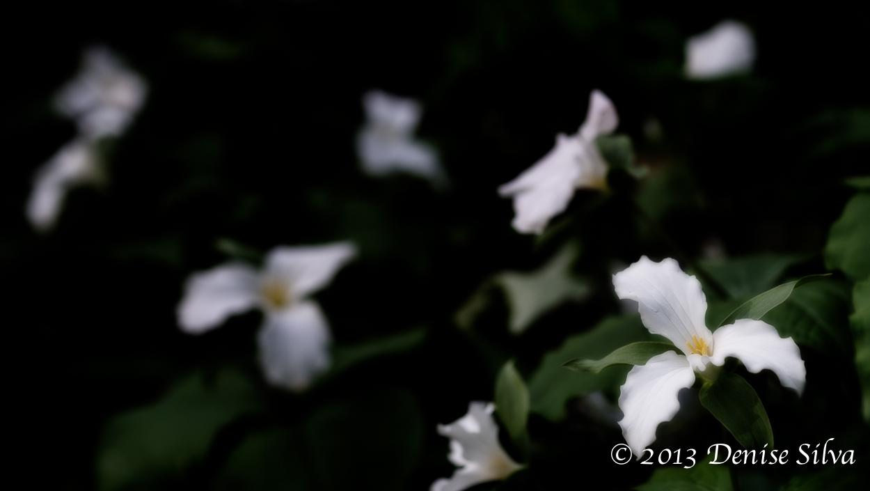 _DSC6807-Edit