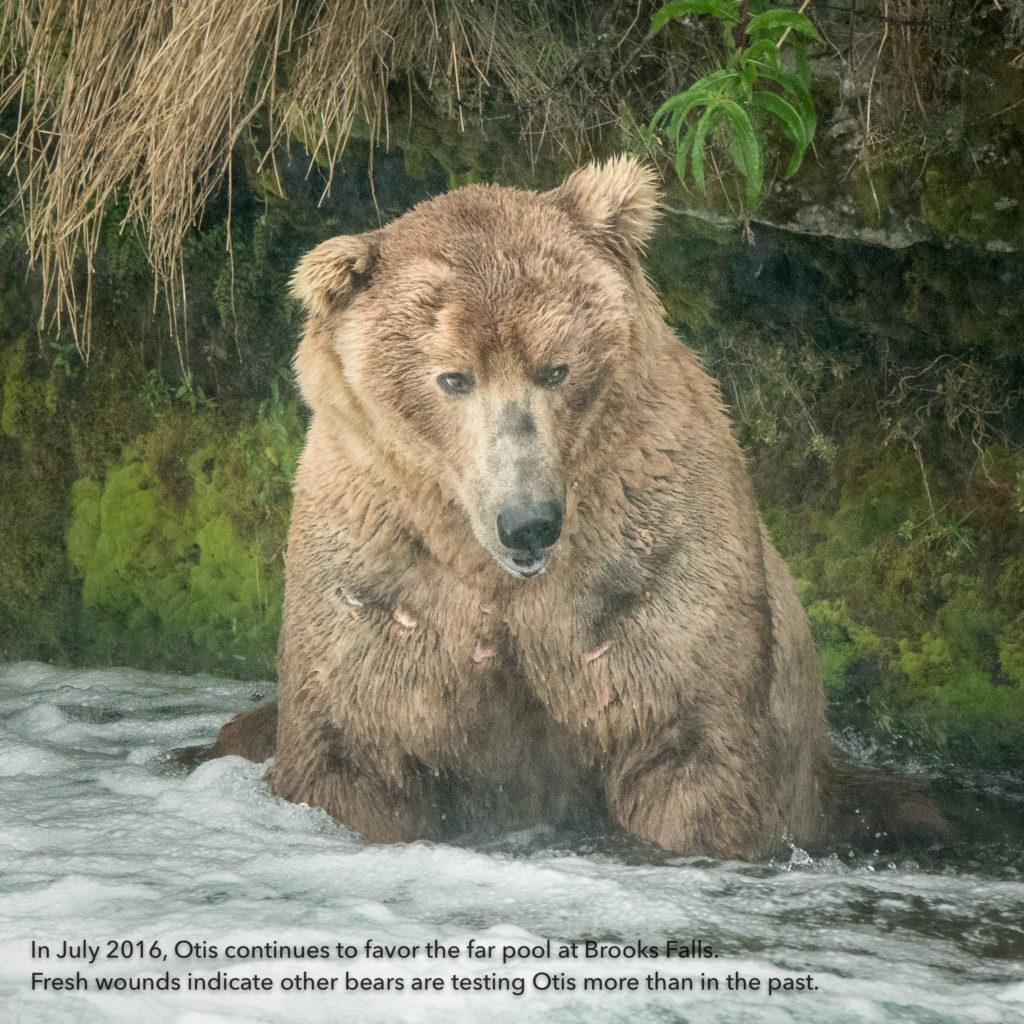 Alaska-—-Juky-2016-165346-Edit-1024x1024.jpg